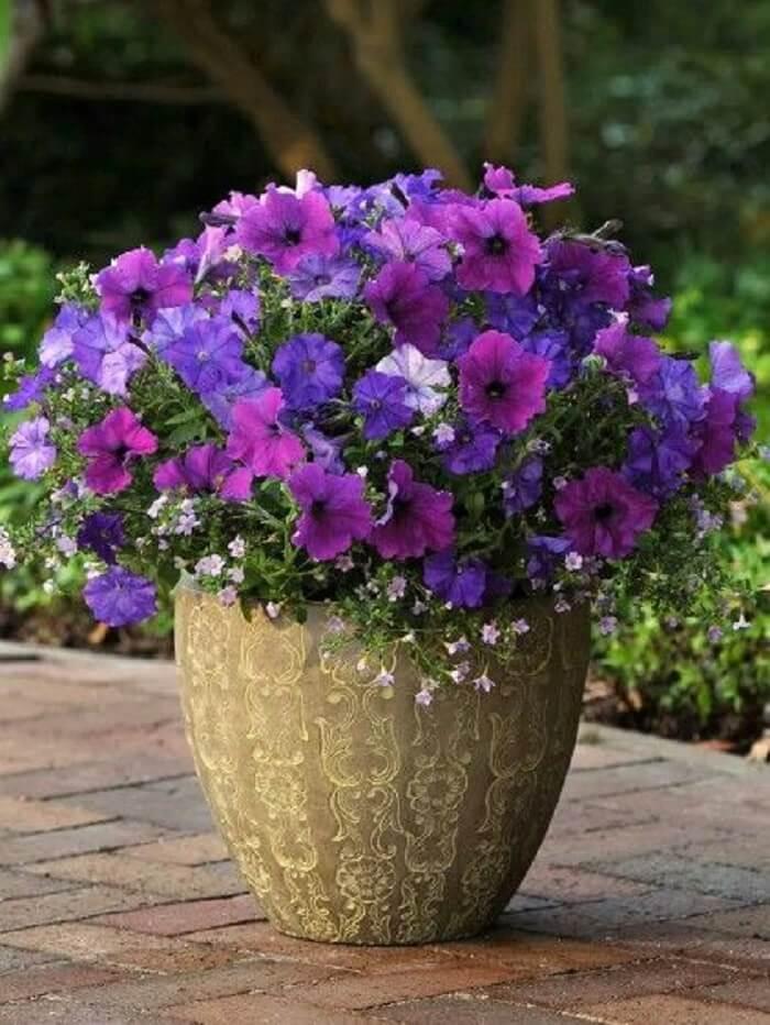 como plantar petunias 3
