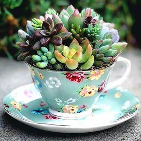 como plantar suculenta xicara colorida