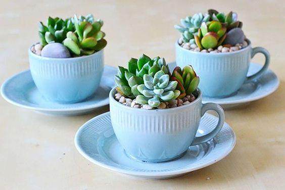 como plantar suculenta xicara festa