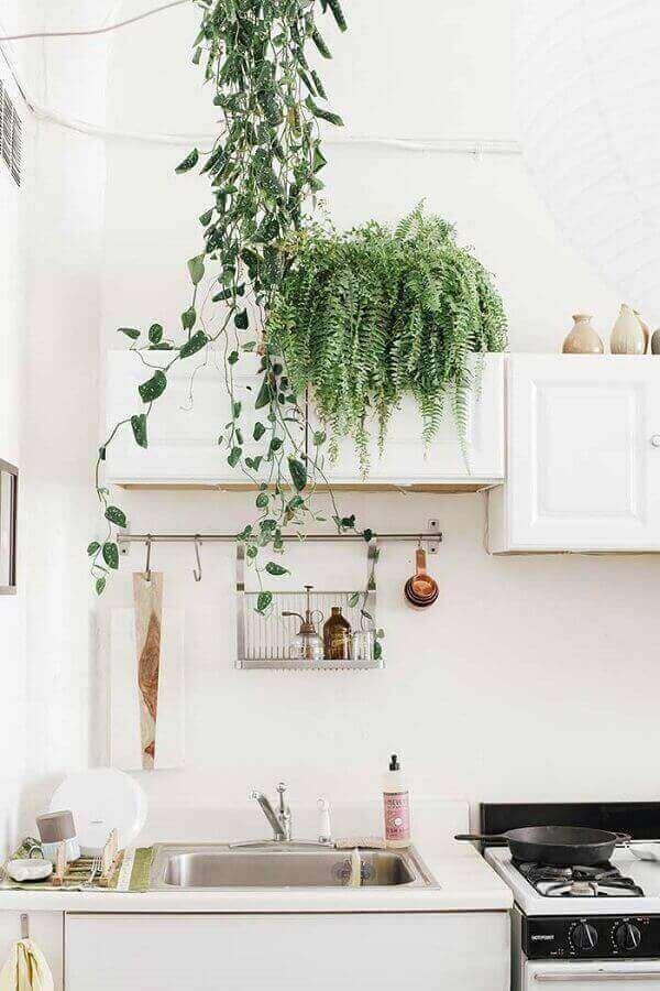 cuidar samambaias cozinha