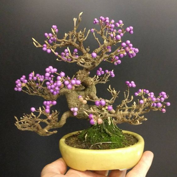 ideias decoracao bonsai flor