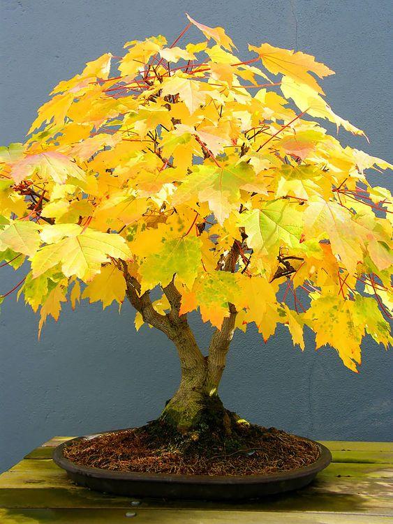 ideias decoracao bonsai folhas