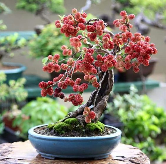 ideias decoracao bonsai frutas