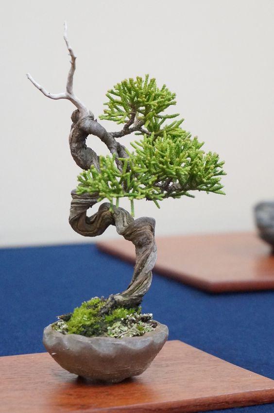 ideias decoracao bonsai inspiracao