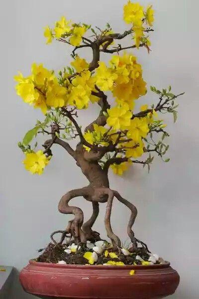 ideias decoracao bonsai raizes