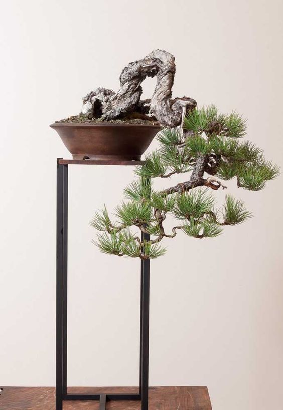 ideias decoracao bonsai
