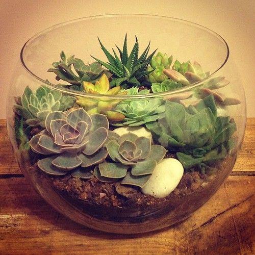 ideias plantar suculentas aquario