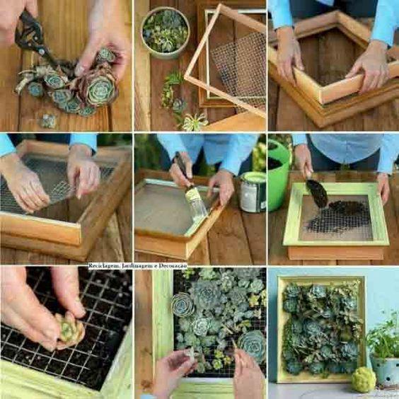 ideias plantar suculentas quadro