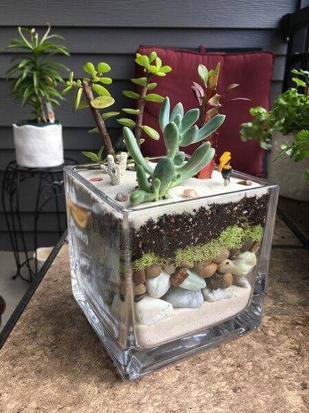 ideias plantar suculentas terrario