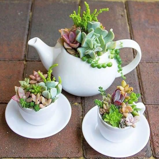 ideias plantar suculentas