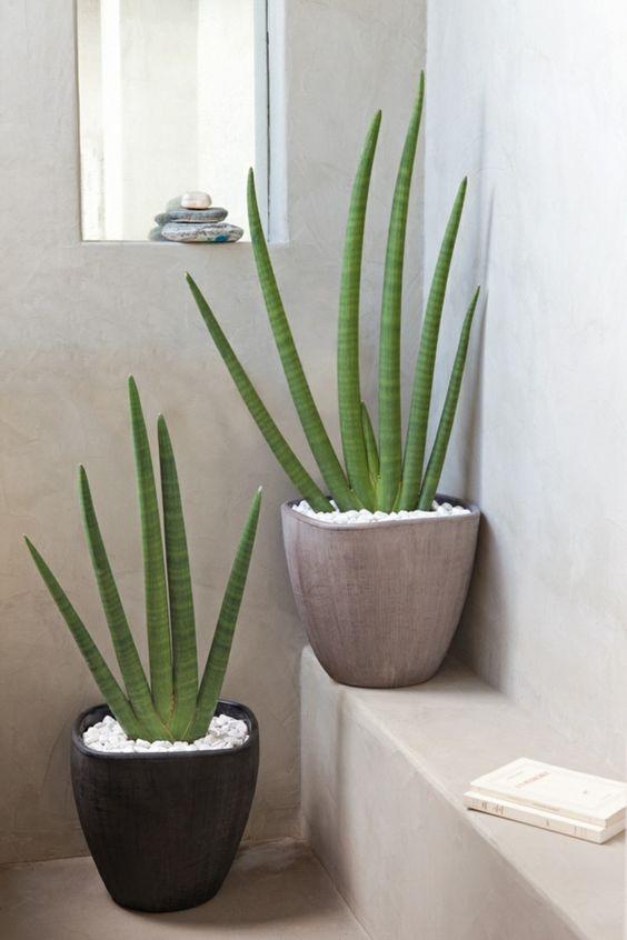 melhores plantas casa aloe vera decoracao