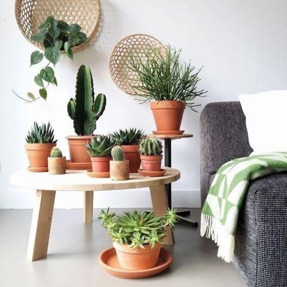 melhores plantas casa cato sala