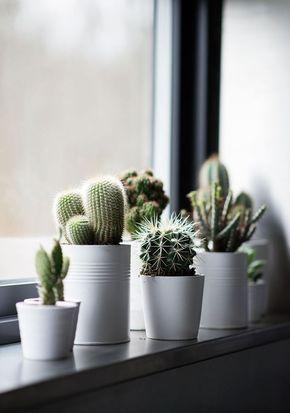 melhores plantas casa cato