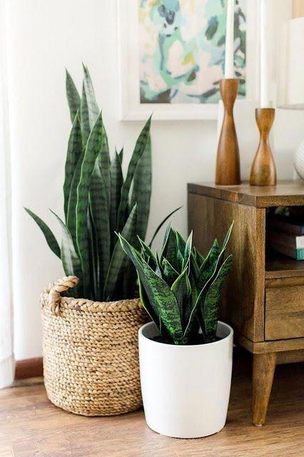 melhores plantas casa decoracao