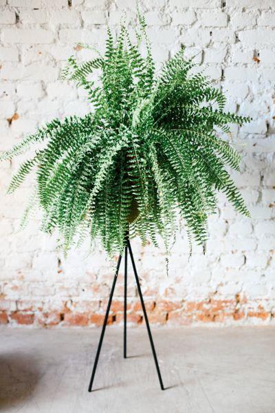 melhores plantas casa samambaia beneficios