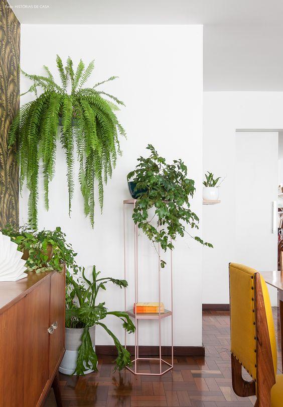 melhores plantas casa samambaia suspensa