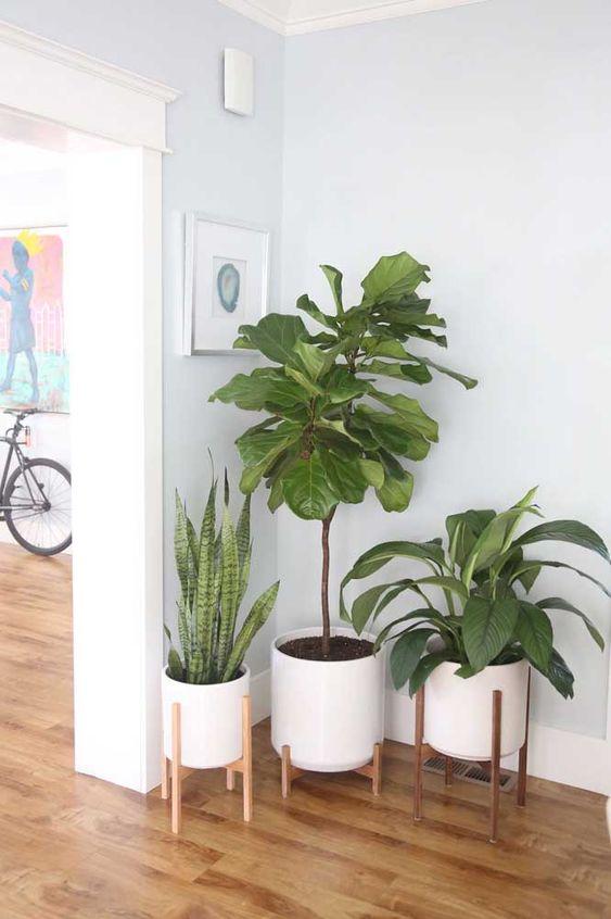 melhores plantas casa