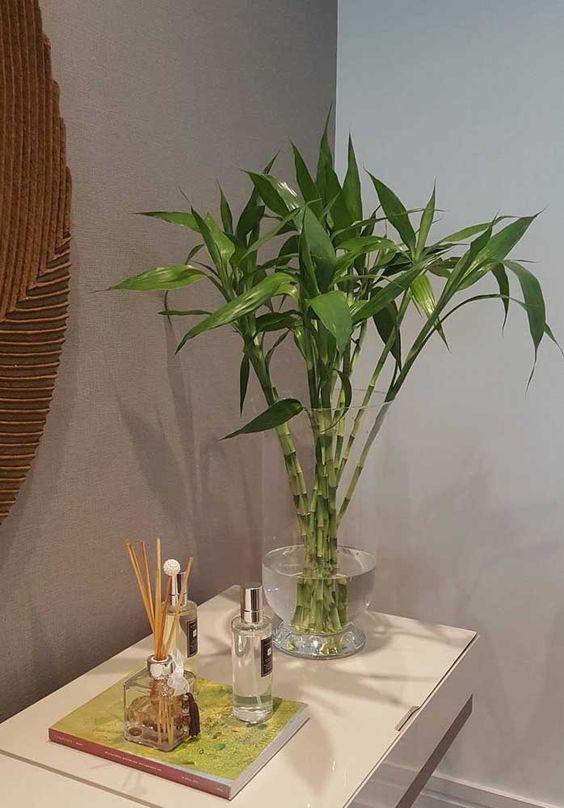plantas atraem energia positiva bambu sorte