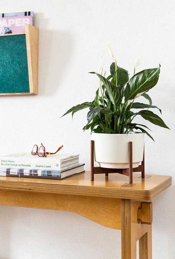 plantas atraem energia positiva lirio paz