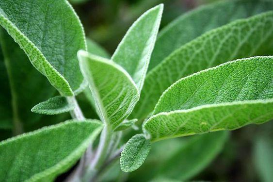 plantas atraem energia positiva salva