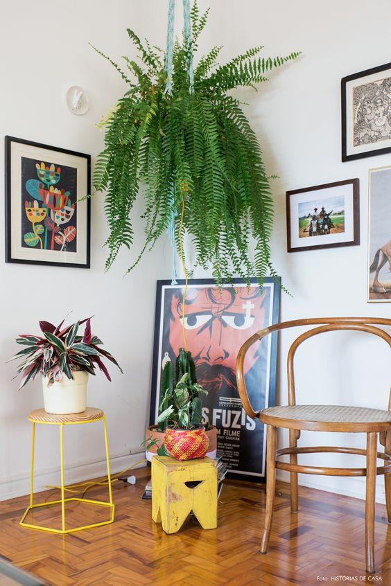 plantas atrair amor samambaia casa