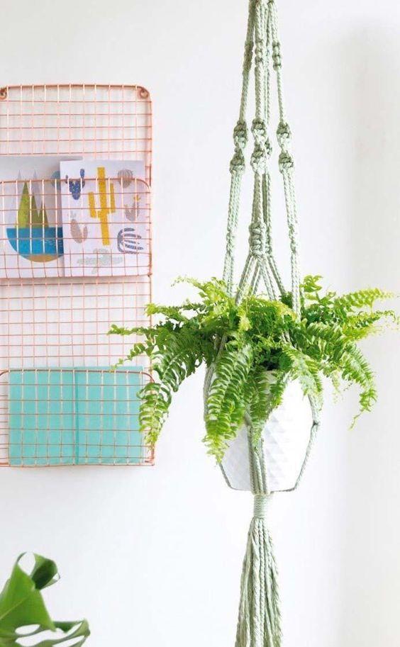 plantas atrair amor samambaia