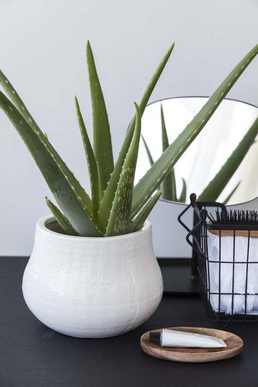 plantas banheiro aloe vera