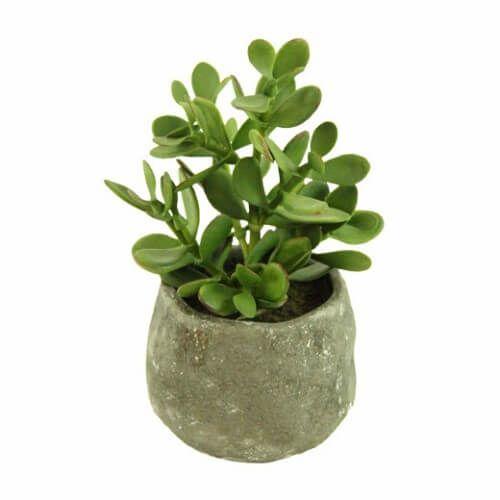 plantas banheiro balsamo