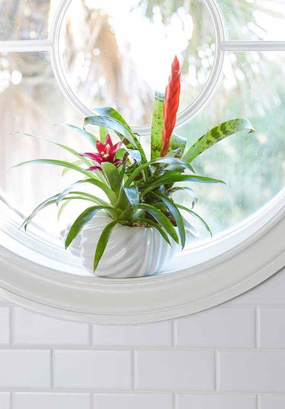 plantas banheiro bromelia decoracao