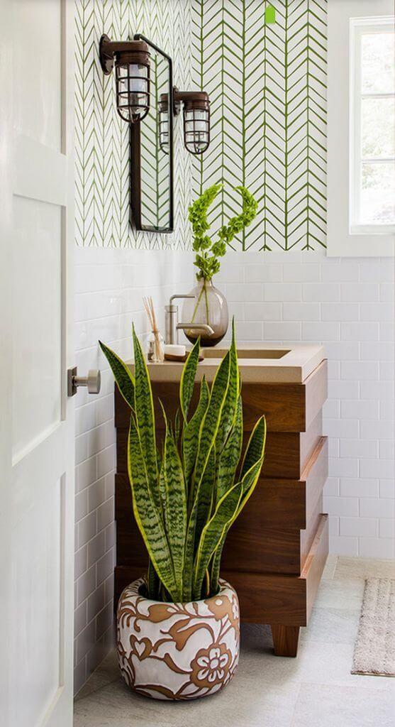 plantas banheiro espada sao jorge