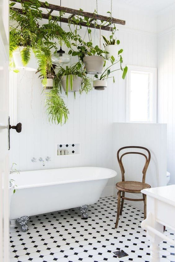 plantas banheiro samambaia decoracao