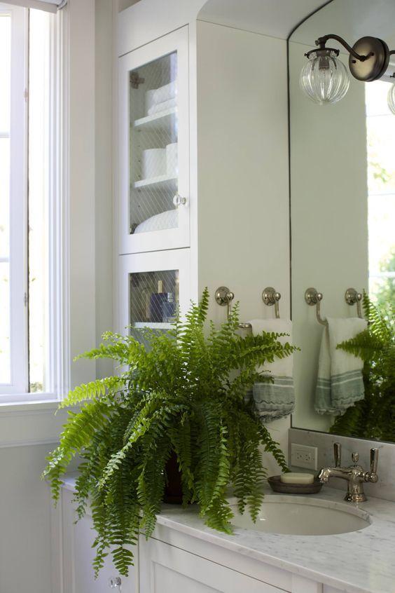 plantas banheiro samambaia