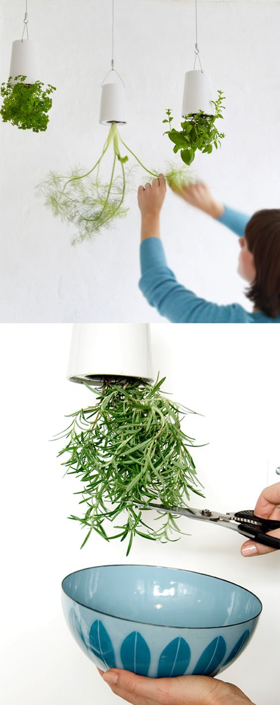 sky planters ideias