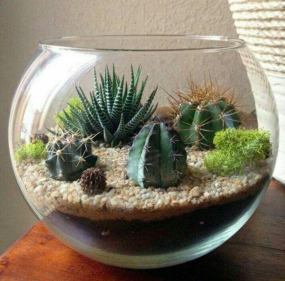 terrario com aquario