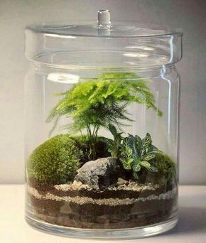 terrario com bonsai