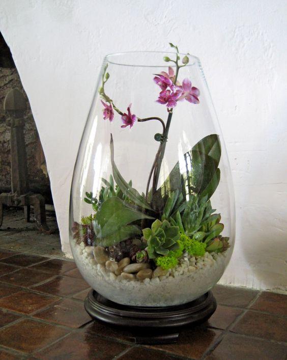 terrario com orquidea